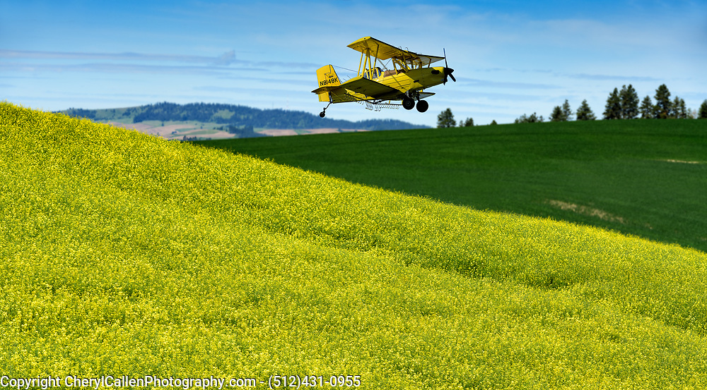 crop duster in the Canola fields