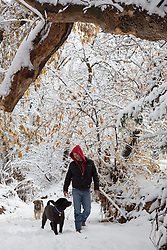 man enjoying a walk with two dogs in a snowy forest