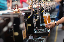 © licensed to London News Pictures. London, UK 13/08/2013. Drink are being prepared for visitors of The Great British Beer Festival 2013 organised by Campaign for Real Ale (CAMRA) at Olympia, London. The event offers visitors more than 800 real ales, ciders, perries and foreign beers to try. 55,000 people are expected to attend this year's Great British Beer Festival. Photo credit: Tolga Akmen/LNP
