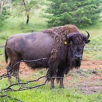 North Buffalo Ranch, Glide, Oregon (owner, Daniel North) Son: Timothy North (18), Daughter: Olivia North (16)