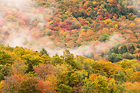 Fall Foliage & Fog, Vermont