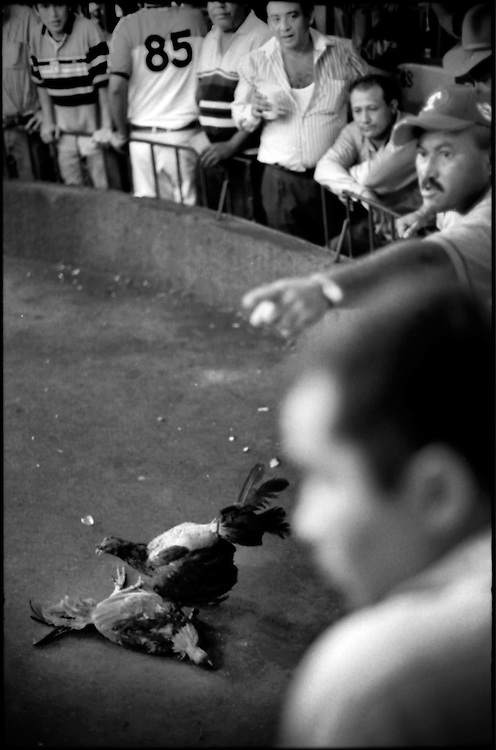 DAILY VENEZUELA / VENEZUELA COTIDIANA.Cockfight / Pelea de Gallos, Clarines, Anzoategui State.Venezuela 2003.(Copyright © Aaron Sosa)