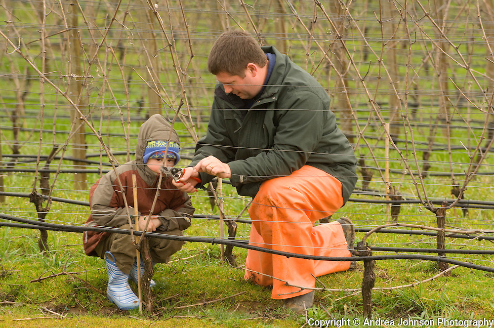 Josh Bergstrom teaching his son how to prune pinot noir vines at family estate vineyard.