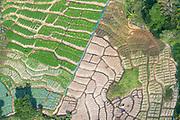 Vegetable Plots, near Diyatalawa.