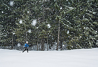 Woman cross country skiing in a snow storm at Cabin Creek Snow Park, Washington Cascades, USA.