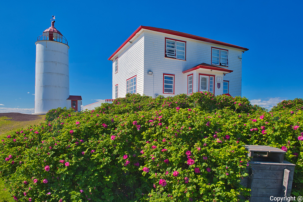 Lighthouse on the island of Isle-Verte in the St. Lawrence River with wild roses in teh foreground<br />L'Isle-Verte<br /> Quebec<br />Canada