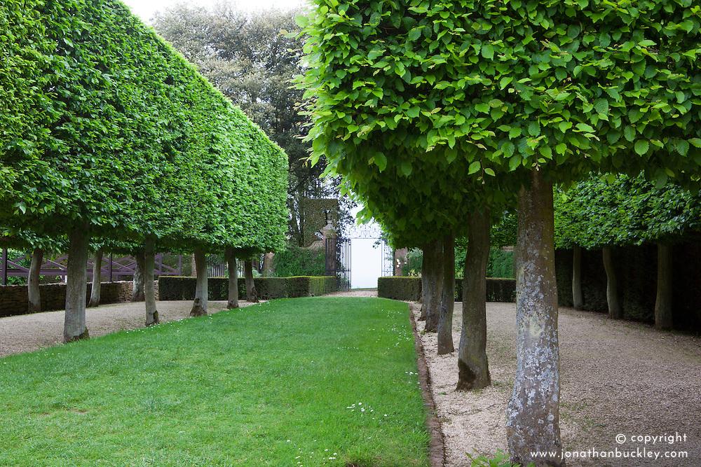 Pleached Hornbeam trees in The Stilt Garden at Hidcote Manor