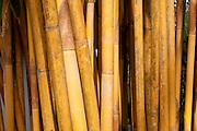 Yellow bamboo stems, close-up