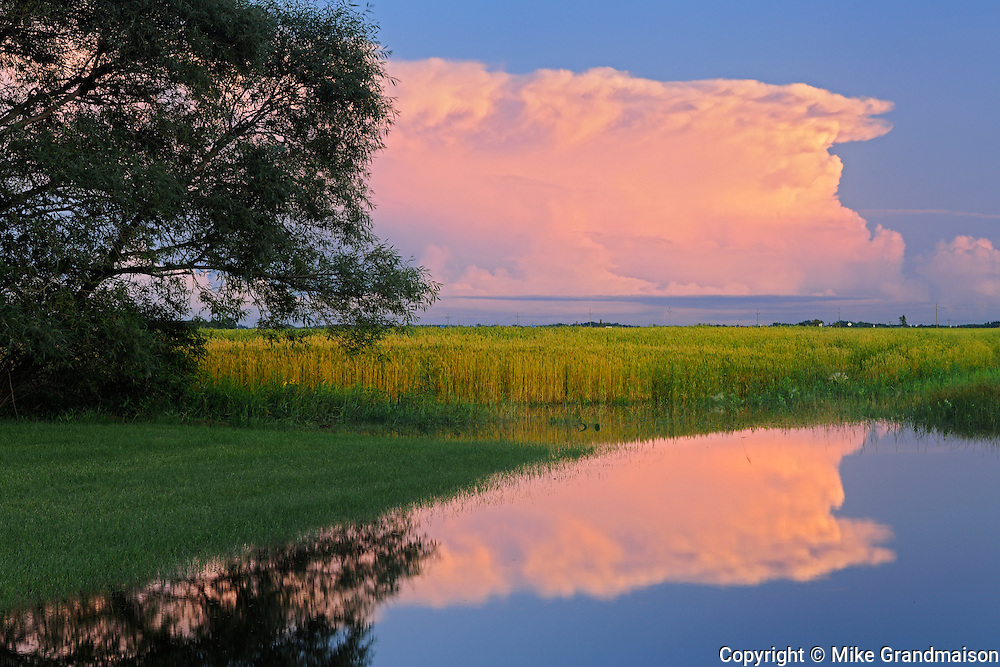 thunderhead cloud reflected in flooded ditch at sunset<br /> Dugald<br /> Manitoba<br /> Canada