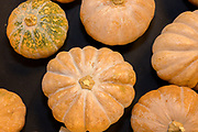 CUCURBITS<br /> Curator: Ted Radovich, UH CTAHR/SOAP Chef: JJ Leng<br /> There are many varieties of pumpkin & squash grown on an estimated 200+ acres at any given time in Hawai'i. The majority of pumpkins grown in Hawai'i belongs to the species Curcubita moschata (tropical pumpkin or calabaza), which is well adapted for the low-land tropics. Current breeding and selection efforts are focused on combining desirable traits such as insect resistance, heat tolerance, dark orange flesh and smooth fruits. The pumpkins featured come from advanced lines selected by CTAHR graduate student Alex Campbell who received her Masters under breeder Mike Kantar.
