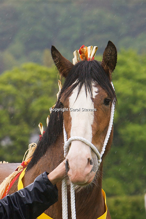 Richard Bedford's  Hartcliff Rihanna   Best Two year old Gelding or Filly