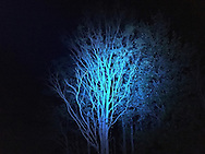 06212016 - Noblesville, Indiana, USA: An LED light shins on a tree during an after party at Backstage Campground near Klipsch Music Center (Deer Creek) after members of the Grateful Dead performed as Dead and Company. The Grateful Dead's final show at  Deer Creek in July 1995 was marred by over a thousand fans crashing the gates leading to the next day's show being canceled. Grateful Dead guitarist Jerry Garcia died a few weeks later. (Jeremy Hogan/Polaris)