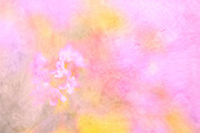 abstract field of color yellows and pinks red violets in horizontal format with white and red violet flower shapes discernible on left half just below center, flower art, feminine, high resolution, licensing, iridescent, 4607 x 3072
