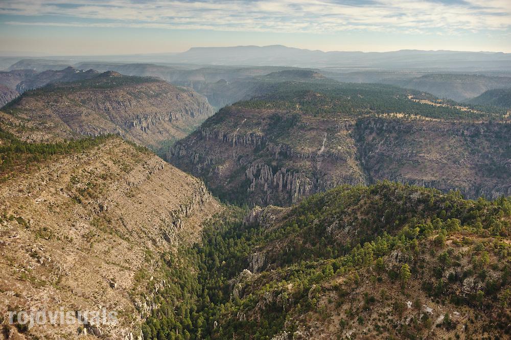 El bosque templado de la parte alta cubre las paredes de estos cañones en la cuenca alta