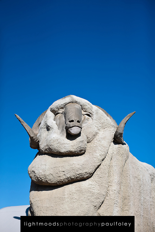 The Big Merino, Goulburn NSW Australia.The Big Merino (nicknamed 'Rambo') was constructed by Glenn Senner and took six months to build. The frame is steel, covered and shaped with wire mesh, sprayed and detailed in reinforced concrete. It stands 15 metres tall and weighs in at 97 tonne. The architect was Gary Dutallis.On the 26th May 2007 this grand structure was moved 800 metres towards the southern exit of the bypass freeway to take advantage of the changed traffic conditions..The move has given Rambo a new lease on life with the construction of a new gift shop and a permanent exhibition from Australian Wool Innovation depicting the history of wool in Australia which is housed in the Big Merino structure.