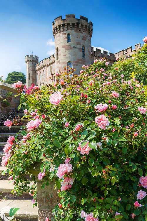 Rose-clad steps rise towards Cholmondeley Castle, Cheshire, photographed in June.