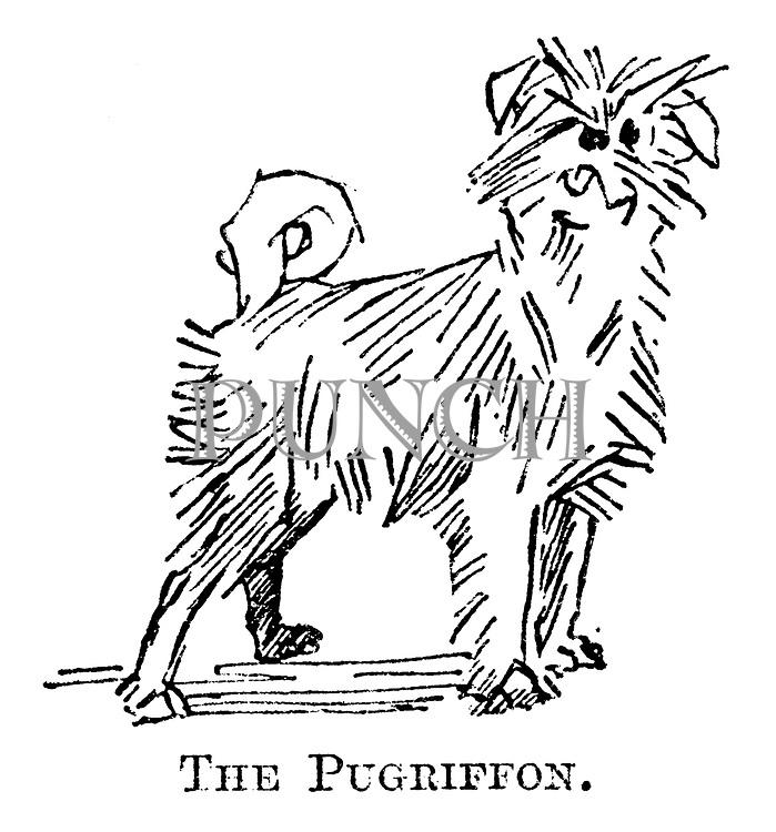 The Pugriffon.