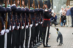 New honour for Sir Nils Olav the famous King penguin | Edinburgh | 22 August 2016