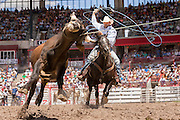Team steer roping rider Jesse Stripes during action at the Cheyenne Frontier Days rodeo at Frontier Park Arena July 24, 2015 in Cheyenne, Wyoming. Frontier Days celebrates the cowboy traditions of the west with a rodeo, parade and fair.