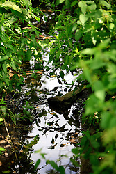 UK ENGLAND WILTSHIRE 26JUN08 - The river Kennet close to its spring near Avesbury in rural Wiltshire, western England...jre/Photo by Jiri Rezac / WWF UK..© Jiri Rezac 2008..Contact: +44 (0) 7050 110 417.Mobile:  +44 (0) 7801 337 683.Office:  +44 (0) 20 8968 9635..Email:   jiri@jirirezac.com.Web:     www.jirirezac.com..© All images Jiri Rezac 2008 - All rights reserved.
