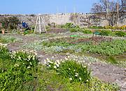 Gertrude Jekyll garden on Holy Island, Lindisfarne, Northumberland, England, UK