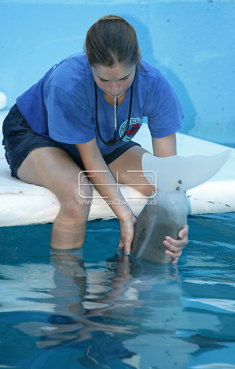 23rd October 2007. Clearwater, Florida. 'Flipper's Fishy Tale'. A major US prosthetic limb manufacturer has come to the aid of a dolphin in need. Prosthetic experts, Hanger Orthopedic Group, who normally tackle the toughest human amputation cases offered to make a tail for 'Winter', an Atlantic Bottlenose Dolphin. Two years ago, the Clearwater Marine Aquarium rescued Winter, after she became tangled in a crab trap. She was dehydrated and near death and the trap line had cut off circulation to her tail. The veterinarians had to amputate. The aquarium is now teaching Winter how to use her new tail, which has to be updated as the young dolphin grows. Pictured is Head Trainer, Abby Stone. PHOTO © JOHN CHAPPLE / REBEL IMAGES.Tel: 310 570 9100..