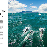 Dolphins glide off the bow of the Lady Eugenie form part of a spread on luxury sail and walking experiences in Tasmania, for Australia In Style