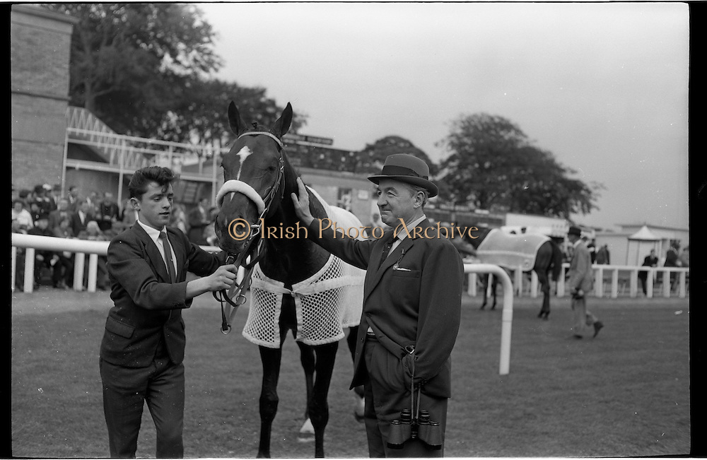 19/09/1962<br /> 09/19/1962<br /> 19 September 1962<br /> Irish St. Leger at the Curragh Race Course, Co. Kildare. Image shows &quot;Arctic Vale&quot; winner of the race being led in with trainer Paddy Prendergast on right.