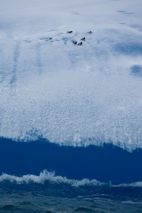 February 10th 2007. Southern Ocean. Birds rest atop a melting iceberg which is reflects the color of the water around it in the Ross Sea.