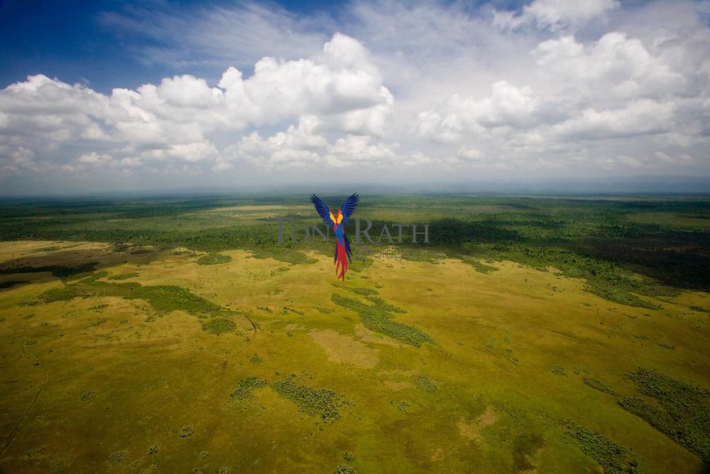 Coastal plain habitat, Toledo District, Belize