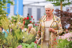 © Licensed to London News Pictures. 20/05/2019. London, UK.  Dame Judith Dench visits Hillier Nurseries. <br /> The Royal Horticultural Society Chelsea Flower Show is an annual garden show held over five days in the grounds of the Royal Hospital Chelsea in West London. The show is open to the public from 21 May until 25 May 2019. Photo credit: Dinendra Haria/LNP