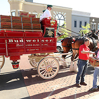 Lawerence Buse, with Mitchell Distributing, shakes hands with Caleb Palmer, owner of The Thirsty Devil, as he receives a delivery from The World Renowned Budweiser Clydesdales on Friday afternoon in downtown Tupelo.