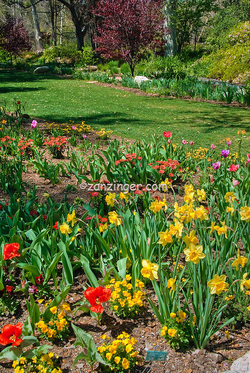 Descanso Gardens, La Canada, Flintridge, California, tranquil scene, Nature, Travel, Outdoors, Flowers, Day, Ca, Pasadena