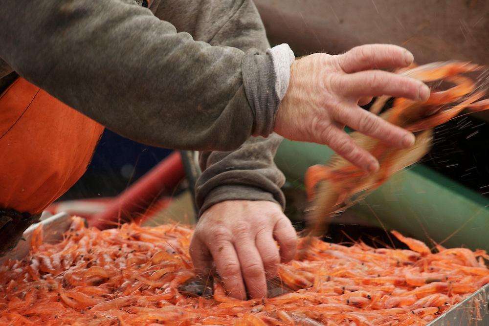 Sorting the Shrimp
