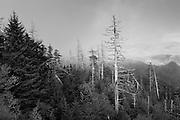 Great Smokey Mountains - Ghost Fir
