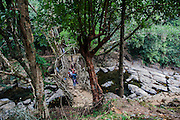Living root bridges at Riwai near Mawlennong village of Meghalaya.