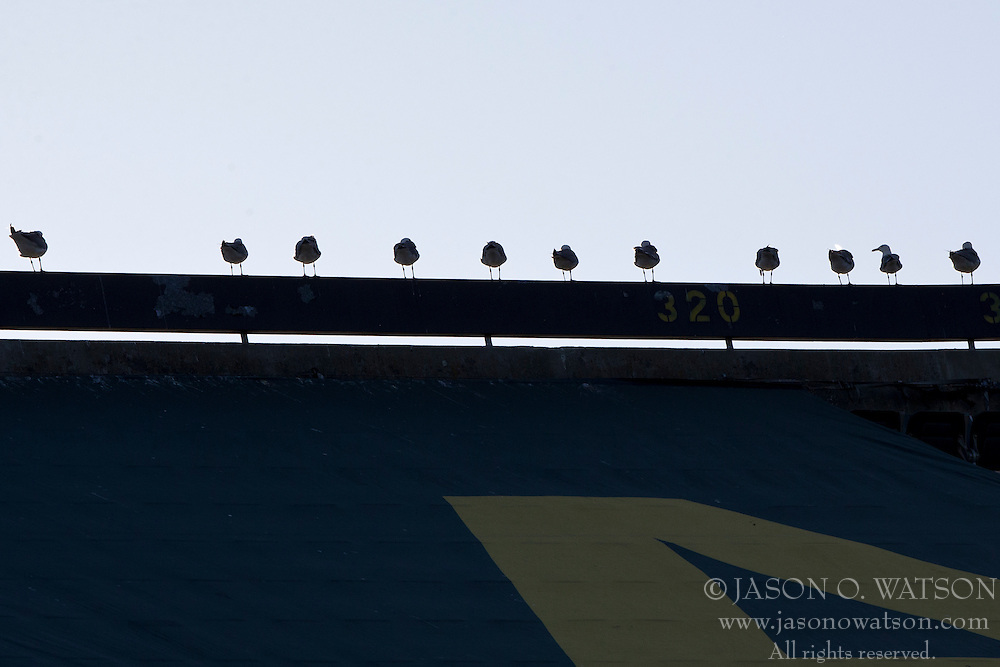 OAKLAND, CA - JULY 05:  General view of sea gulls perched on top of a railing during the first inning between the Oakland Athletics and the Toronto Blue Jays at O.co Coliseum on July 5, 2014 in Oakland, California. The Oakland Athletics defeated the Toronto Blue Jays 5-1.  (Photo by Jason O. Watson/Getty Images) *** Local Caption ***