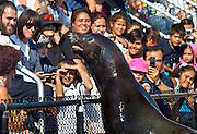 Seal performance at the New York Aquarium in coney Island.