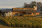 Penner-Ash Winery, Yamhill-Carlton estate vineyard, Willamette Valley, Oregon