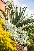 Southern California Drought Tolerant Landscape