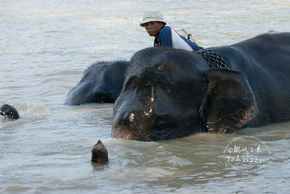 Man bathing elephant at Way Jambas Elephant Park, Sumatra, Indonesia