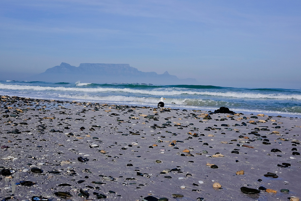 Table Mountain,Cape Town, South Africa. Mussel and other shells litter the beach after heavy seas. A blanket of smog covers the base of Table Mountain in the early winter morning.