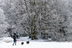A dog walker with her two English Sheep Dogs makes her way across the snowy landscape as people and their pets enjoy the three inches of snow on Hampstead Heath in North London. Hampstead, London, February 01 2019.