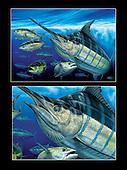 Top Billing_blue marlin