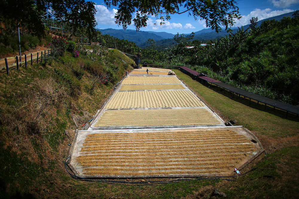 Drying patios at La Candelilla are shown during the 2016 Starbucks Origin Experience for Partners. Photographed in January 2016. (Joshua Trujillo, Starbucks)