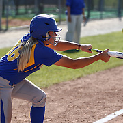Hofstra University Infielder Megan Patierno (36) bunts during a Colonial Athletic Association regular season softball game between Delaware and Hofstra Saturday, April 16, 2016, at Delaware softball stadium in Newark, Delaware.