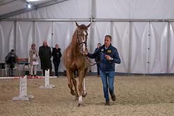 Van Der Meer Patrick, NED, Zippo<br /> Jumping Mechelen 2018<br /> © Hippo Foto - Sharon Vandeput<br /> 27/12/18