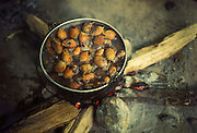 Use of forest products by Eñepa (Panare) Indians of Guiana Highlands of Venezuela: palm fruits (Attalea sp.) cooking over log hearth.