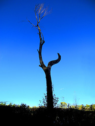 Bare tree trunk against blue sky.