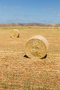 Round hay bales in a paddock on a farm after baling in rural Cambri, South Australia, Australia.